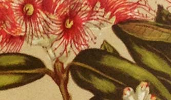 Detail of floral print card